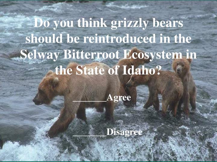 Do you think grizzly bears should be reintroduced in the Selway Bitterroot Ecosystem in the State of...