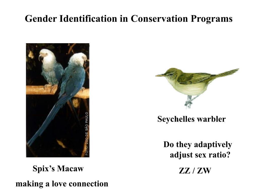Gender Identification in Conservation Programs
