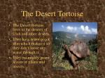 the desert tortoise