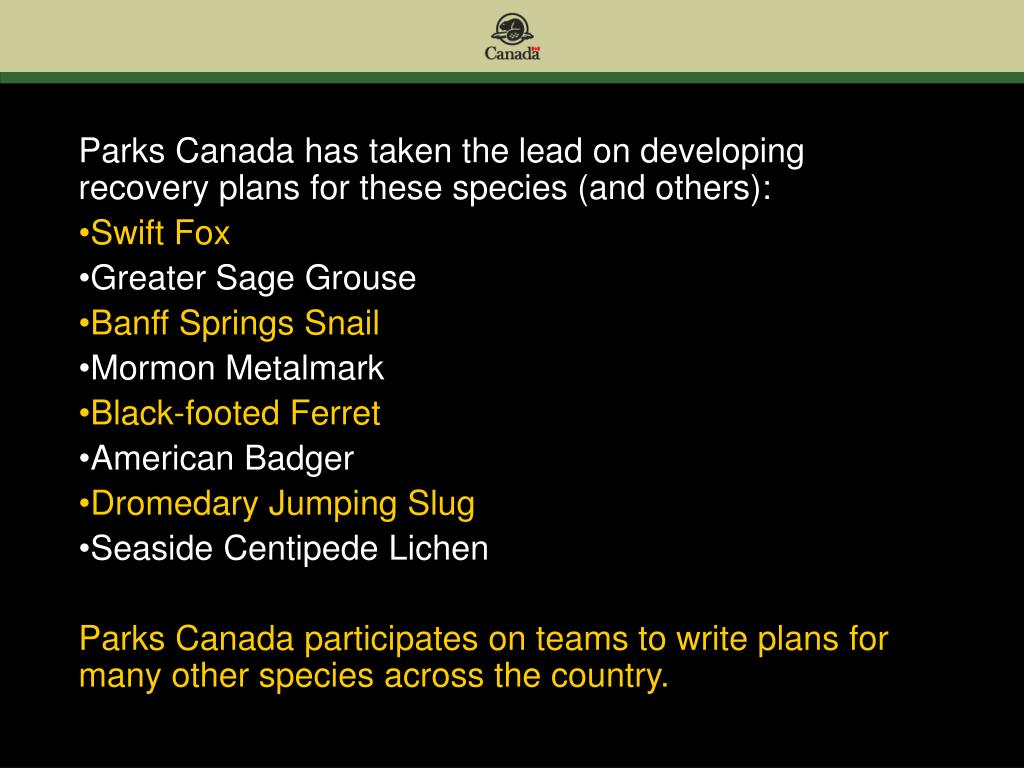 Parks Canada has taken the lead on developing recovery plans for these species (and others):