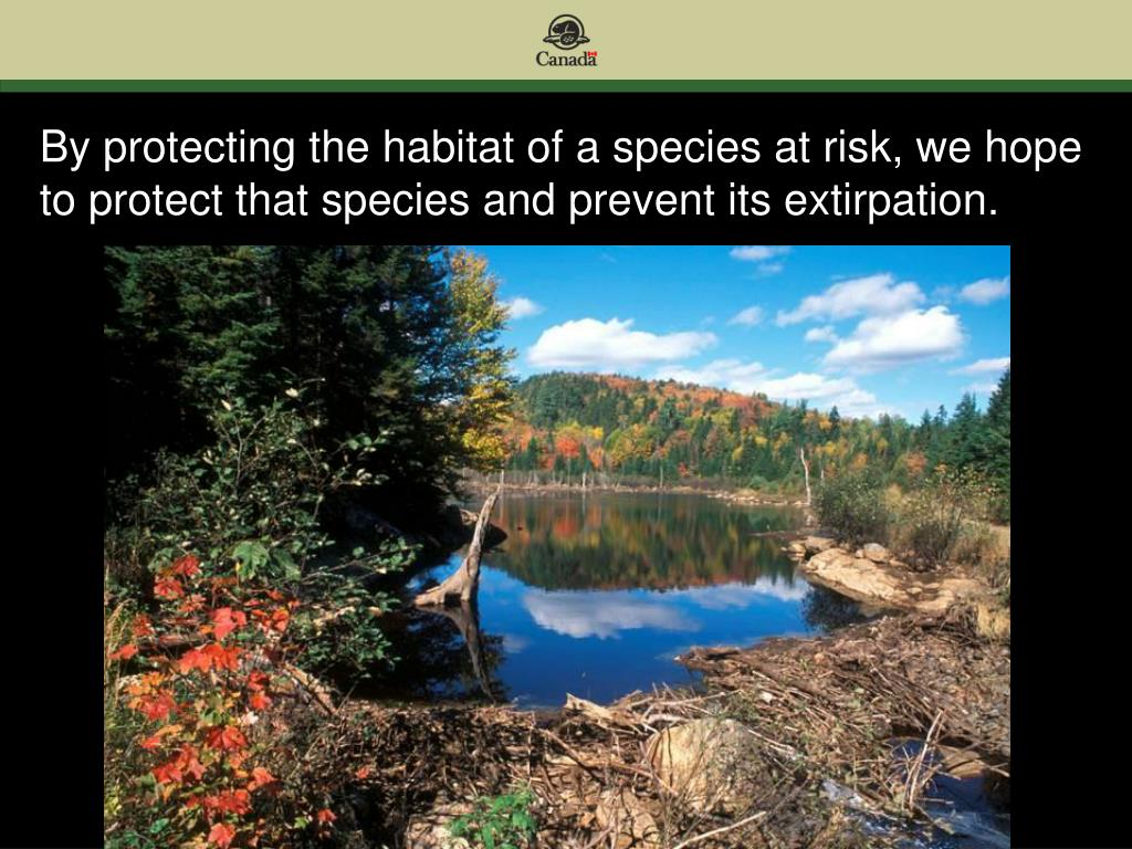 By protecting the habitat of a species at risk, we hope to protect that species and prevent its extirpation.
