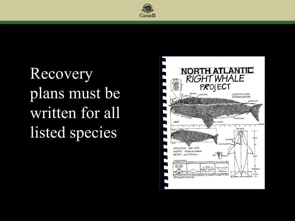 Recovery plans must be written for all listed species