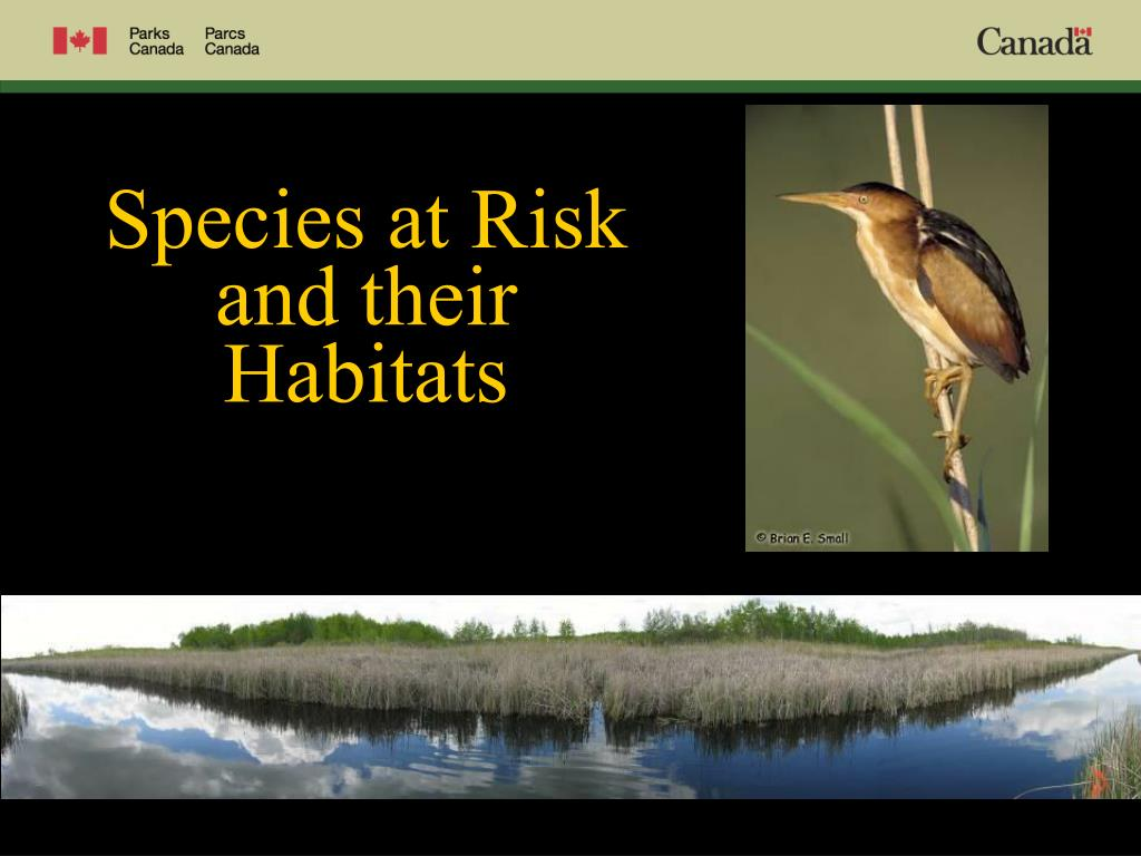 Species at Risk and their Habitats