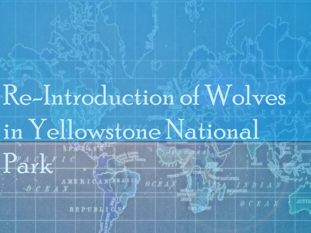 Re-Introduction of Wolves in Yellowstone National Park