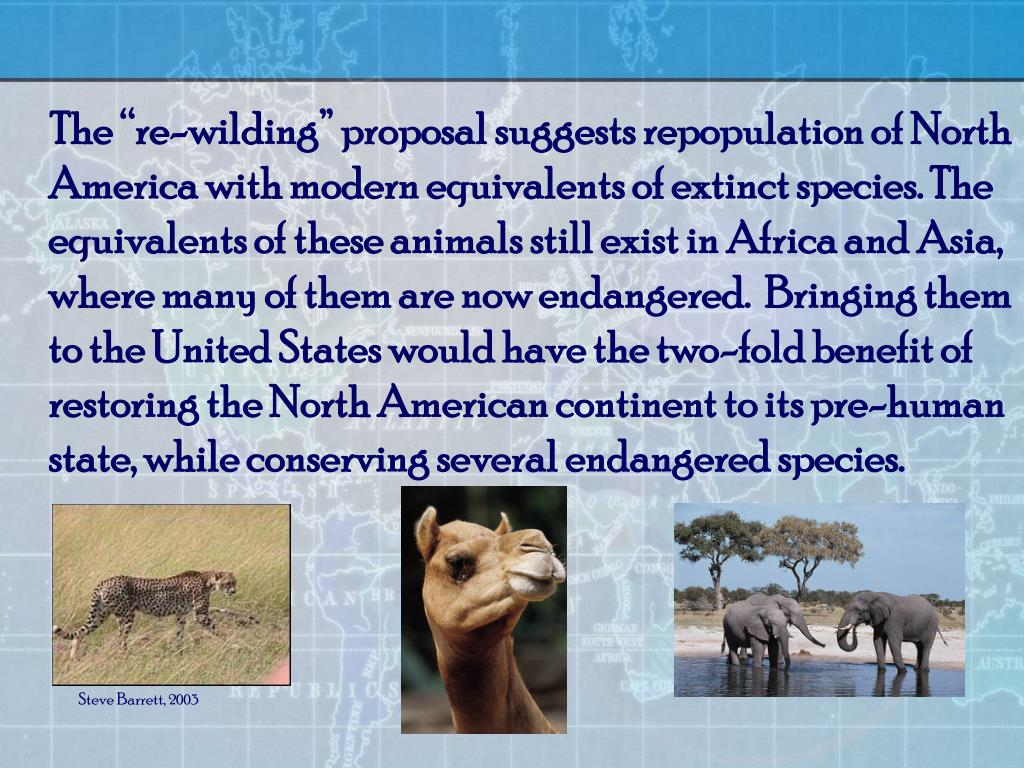 """The """"re-wilding"""" proposal suggests repopulation of North America with modern equivalents of extinct species. The equivalents of these animals still exist in Africa and Asia, where many of them are now endangered.  Bringing them to the United States would have the two-fold benefit of restoring the North American continent to its pre-human state, while conserving several endangered species."""