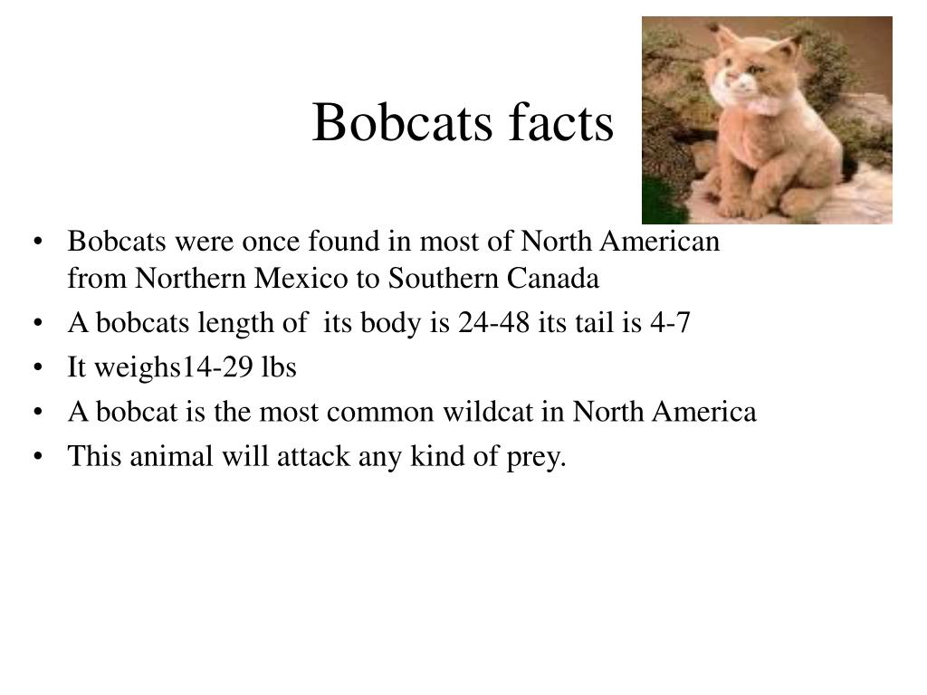 Bobcats facts