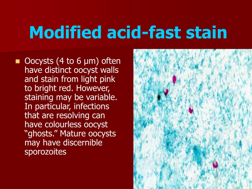 Modified acid-fast stain