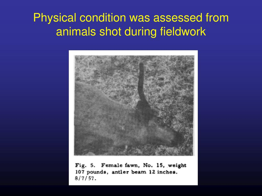 Physical condition was assessed from animals shot during fieldwork