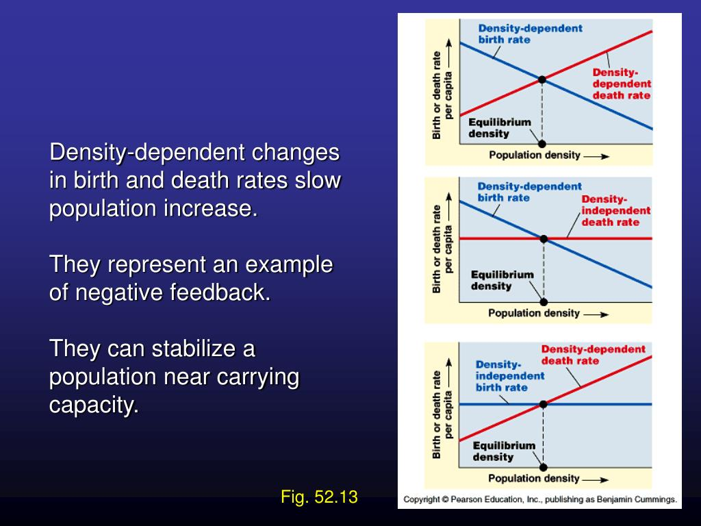Density-dependent changes in birth and death rates slow population increase.