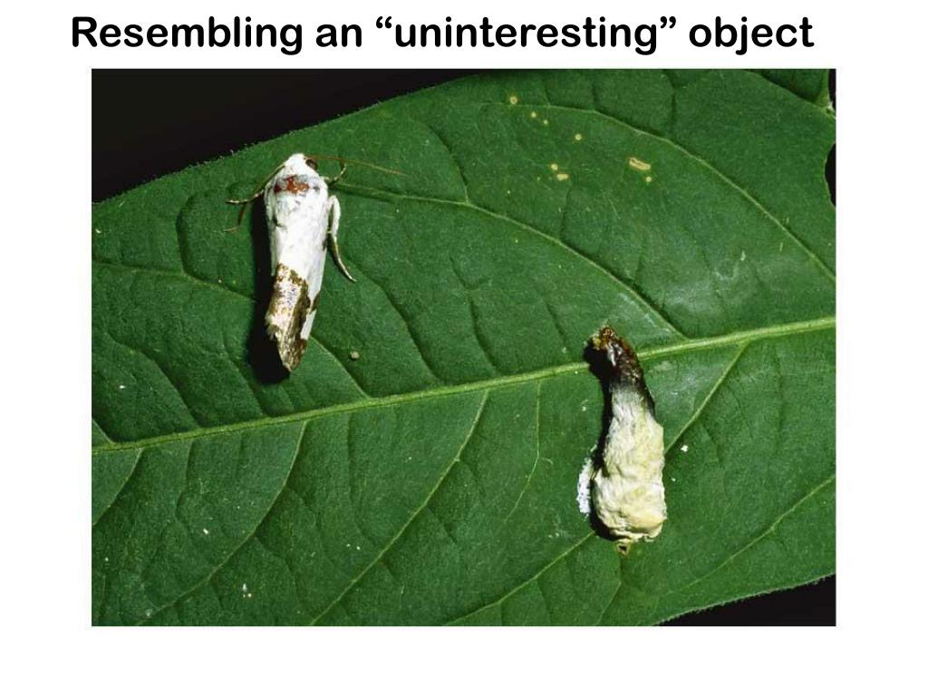 "Resembling an ""uninteresting"" object"