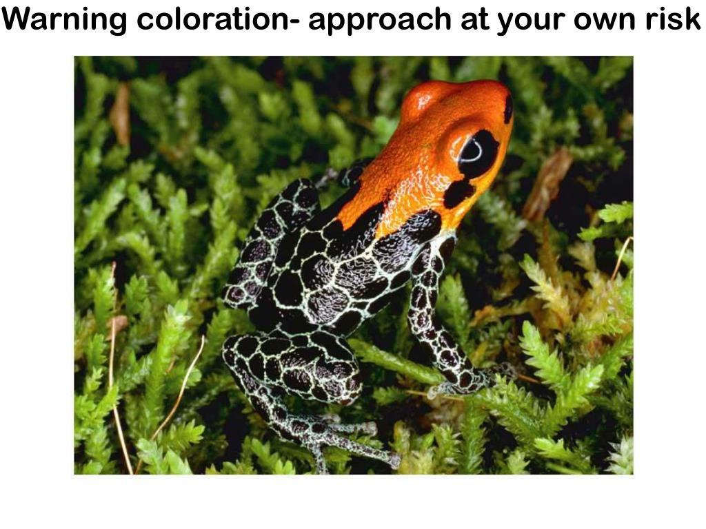 Warning coloration- approach at your own risk