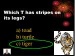 which t has stripes on its legs