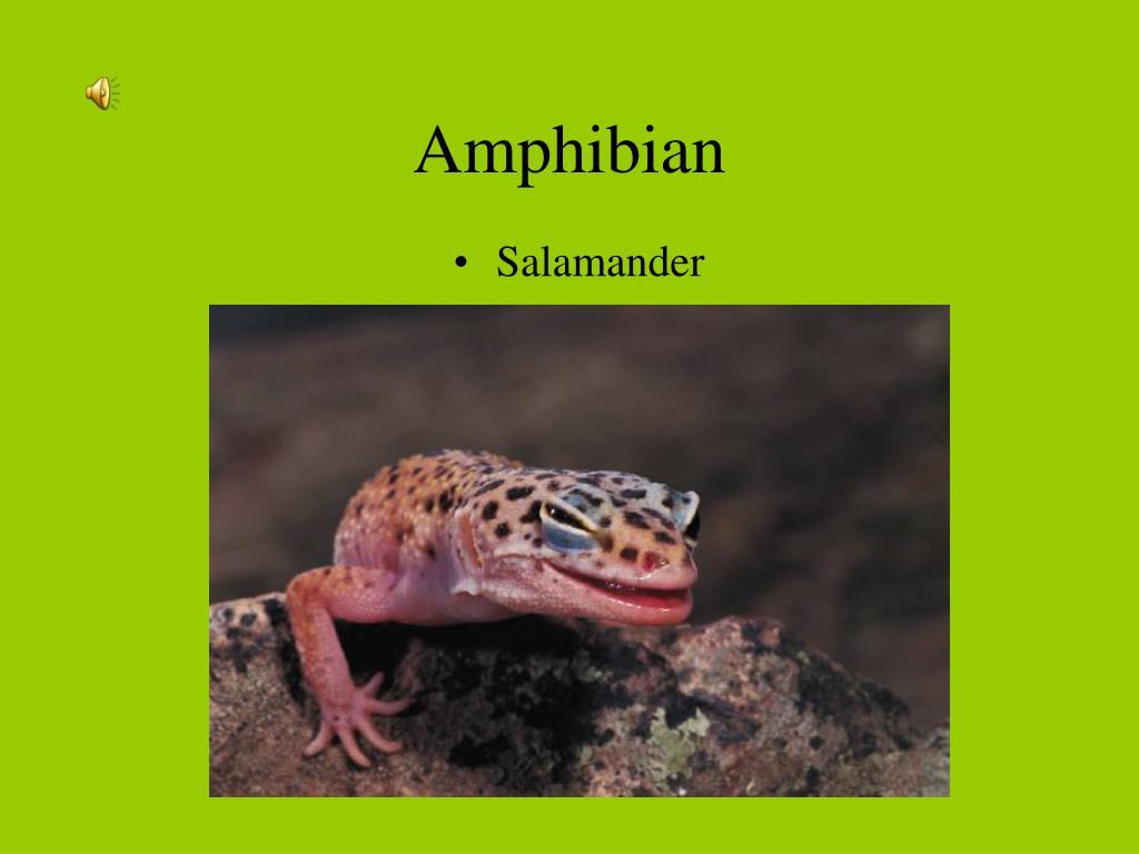 amphibian l.