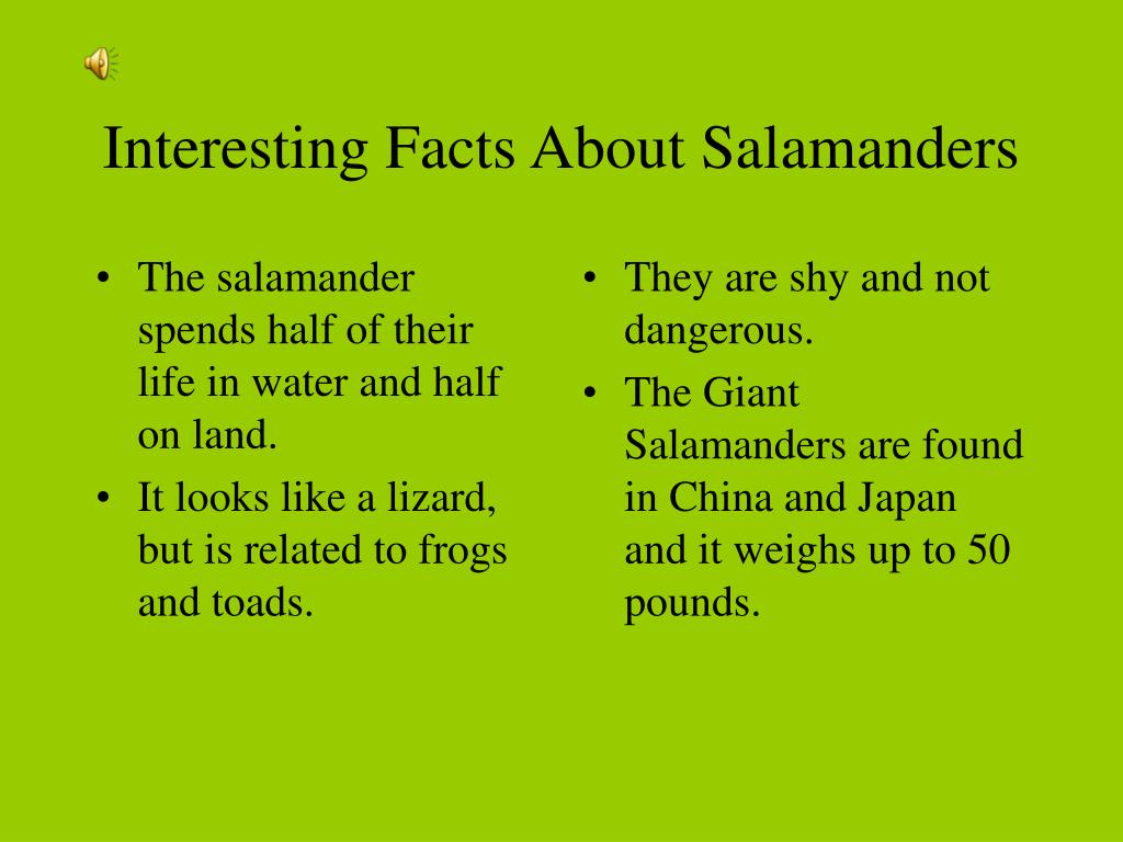 The salamander spends half of their life in water and half on land.