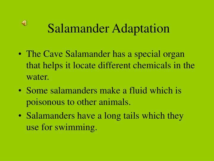 Salamander adaptation