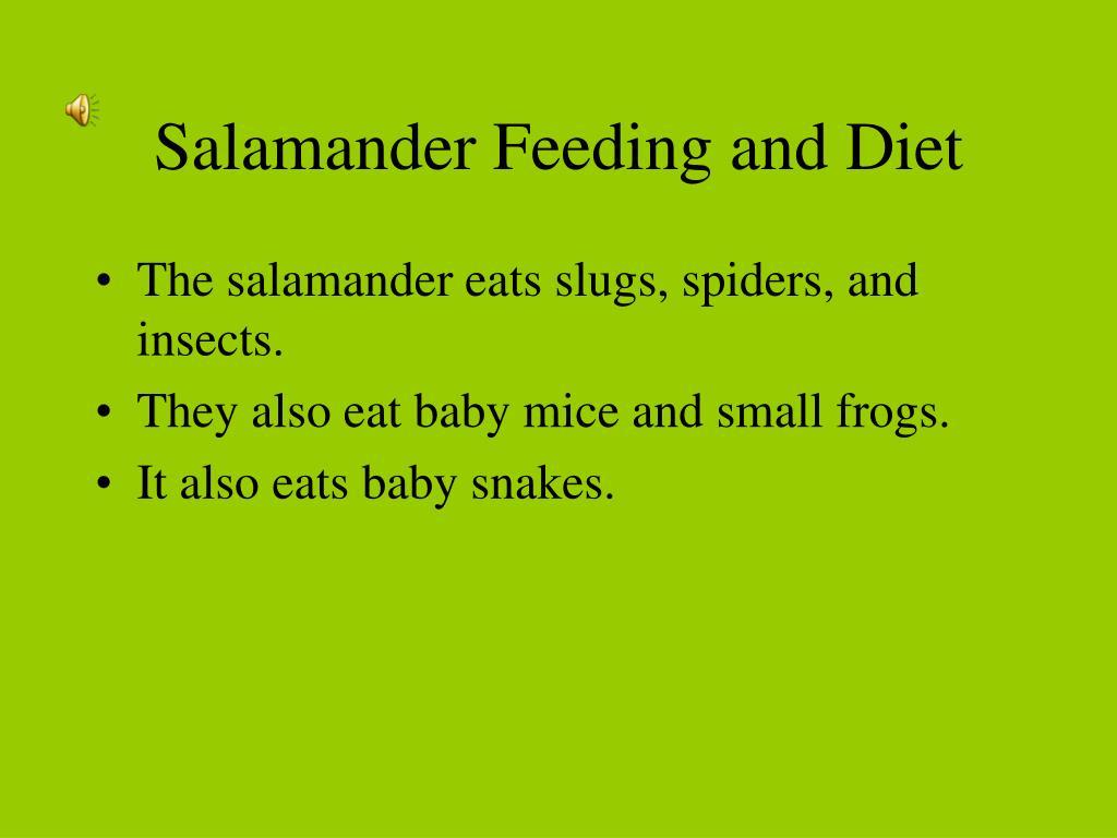 Salamander Feeding and Diet
