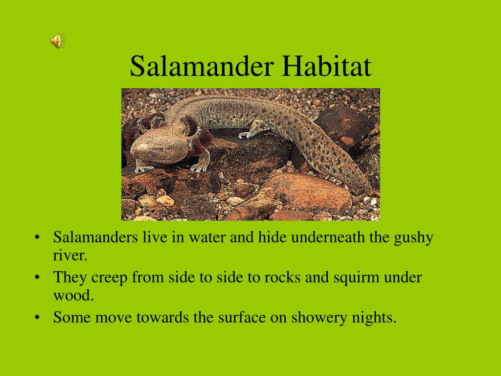Salamander Habitat