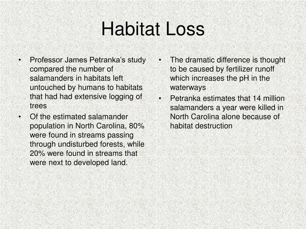 Professor James Petranka's study compared the number of salamanders in habitats left untouched by humans to habitats that had had extensive logging of trees