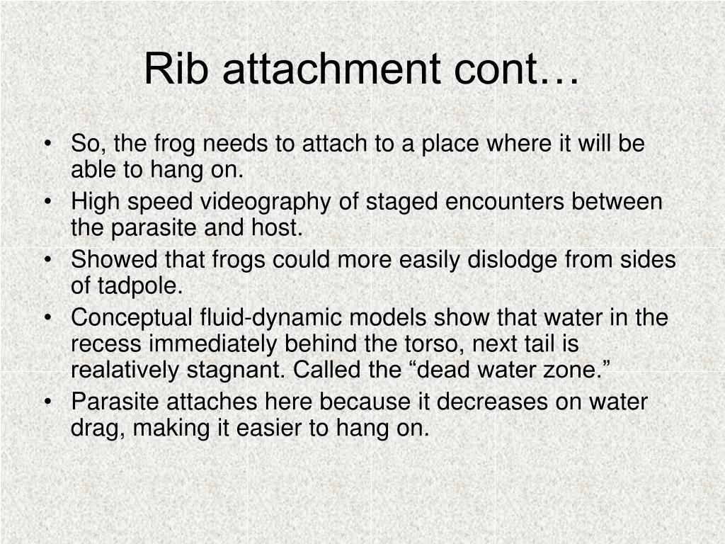 Rib attachment cont…