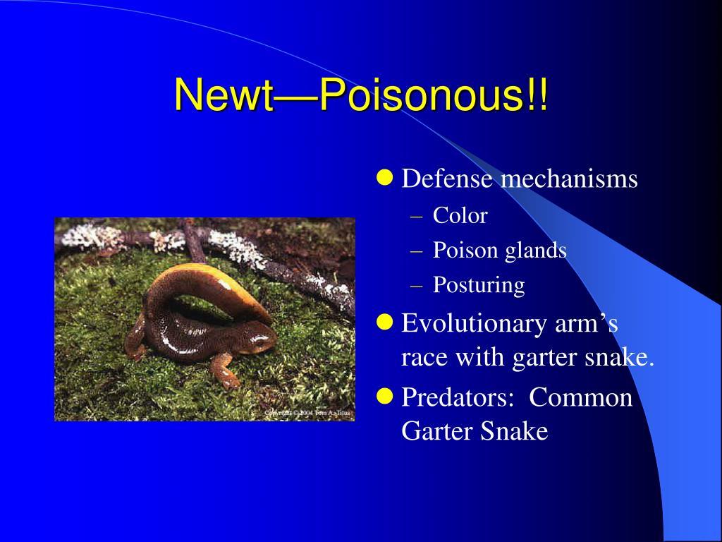 Newt—Poisonous!!