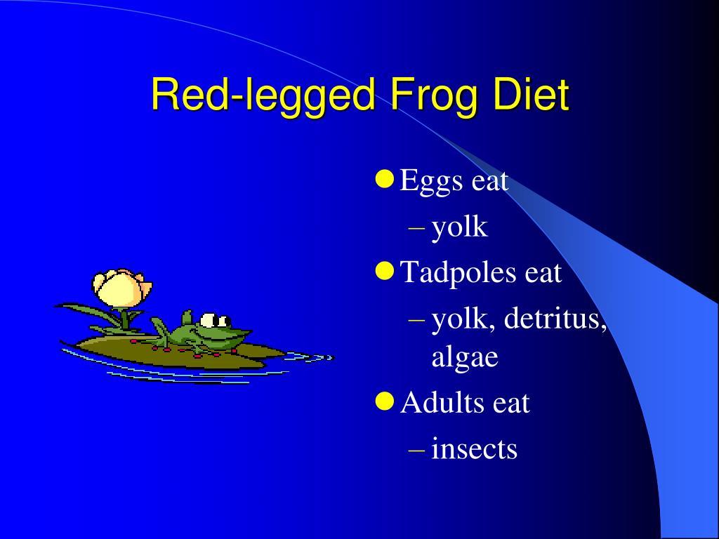 Red-legged Frog Diet