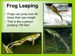 frog leaping