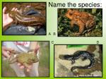 name the species