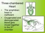 three chambered heart