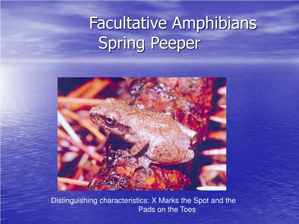 Facultative Amphibians Spring Peeper