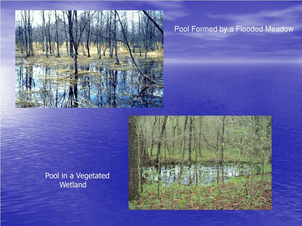 Pool Formed by a Flooded Meadow