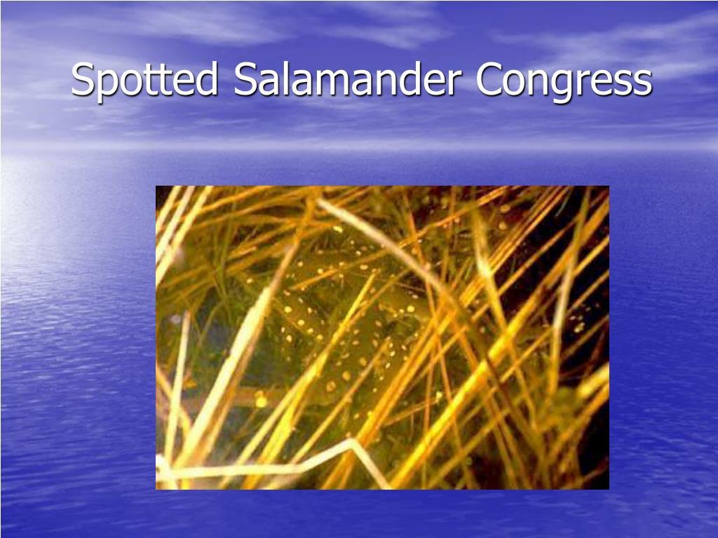 Spotted Salamander Congress