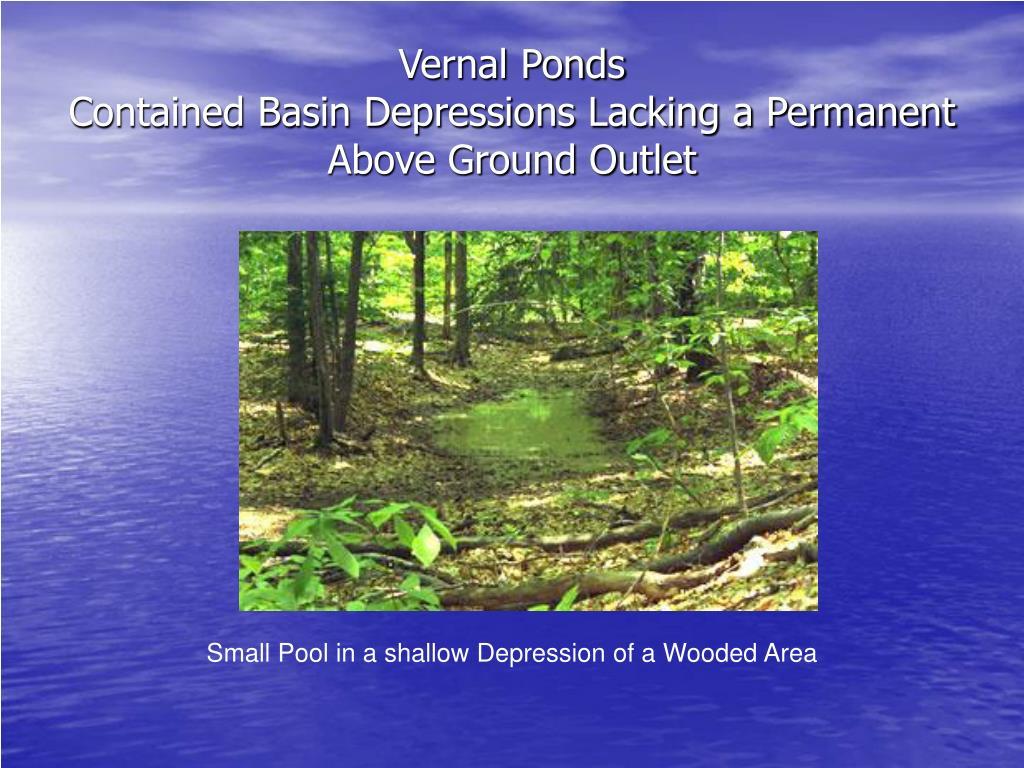 Vernal Ponds