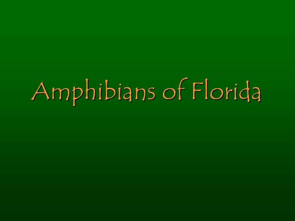 amphibians of florida l.