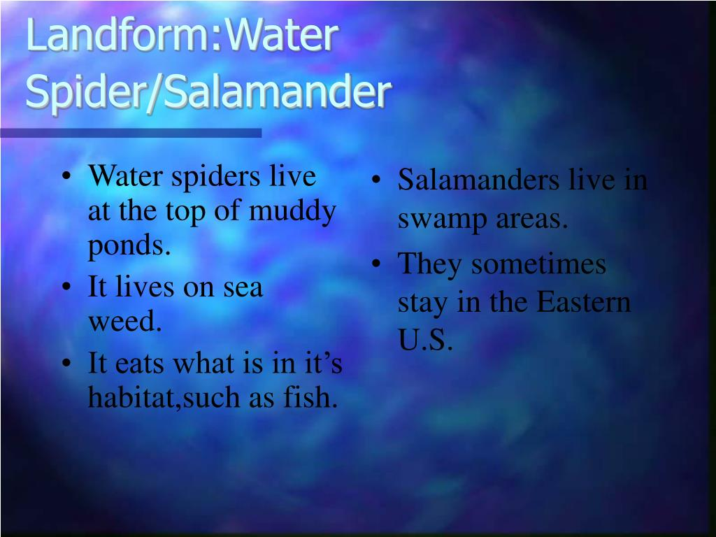 Water spiders live at the top of muddy ponds.