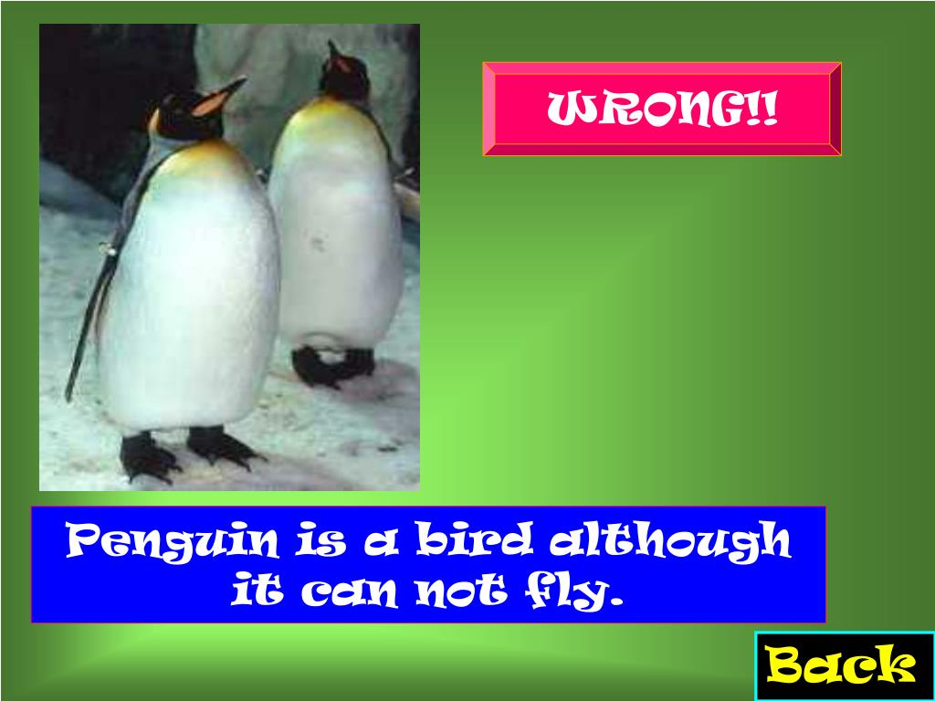 Penguin is a bird although it can not fly.