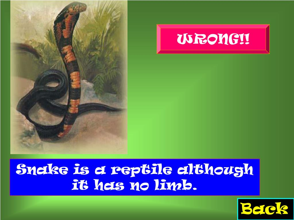 Snake is a reptile although it has no limb.