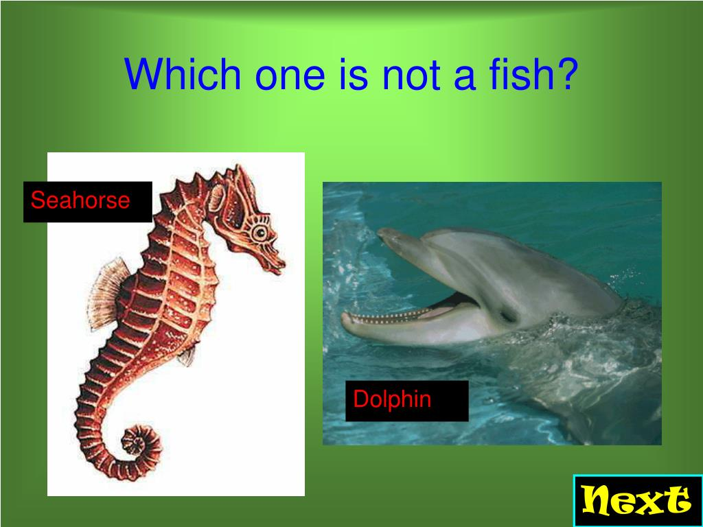 Which one is not a fish?
