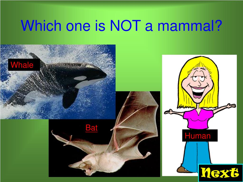 Which one is NOT a mammal?
