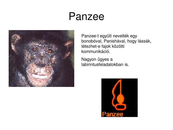 Panzee