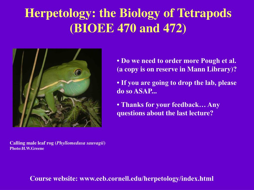 herpetology the biology of tetrapods bioee 470 and 472 l.