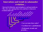 innovations and trends in salamander evolution
