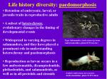 life history diversity paedomorphosis