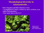 morphological diversity in salamandroids