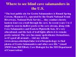 where to see blind cave salamanders in the u s