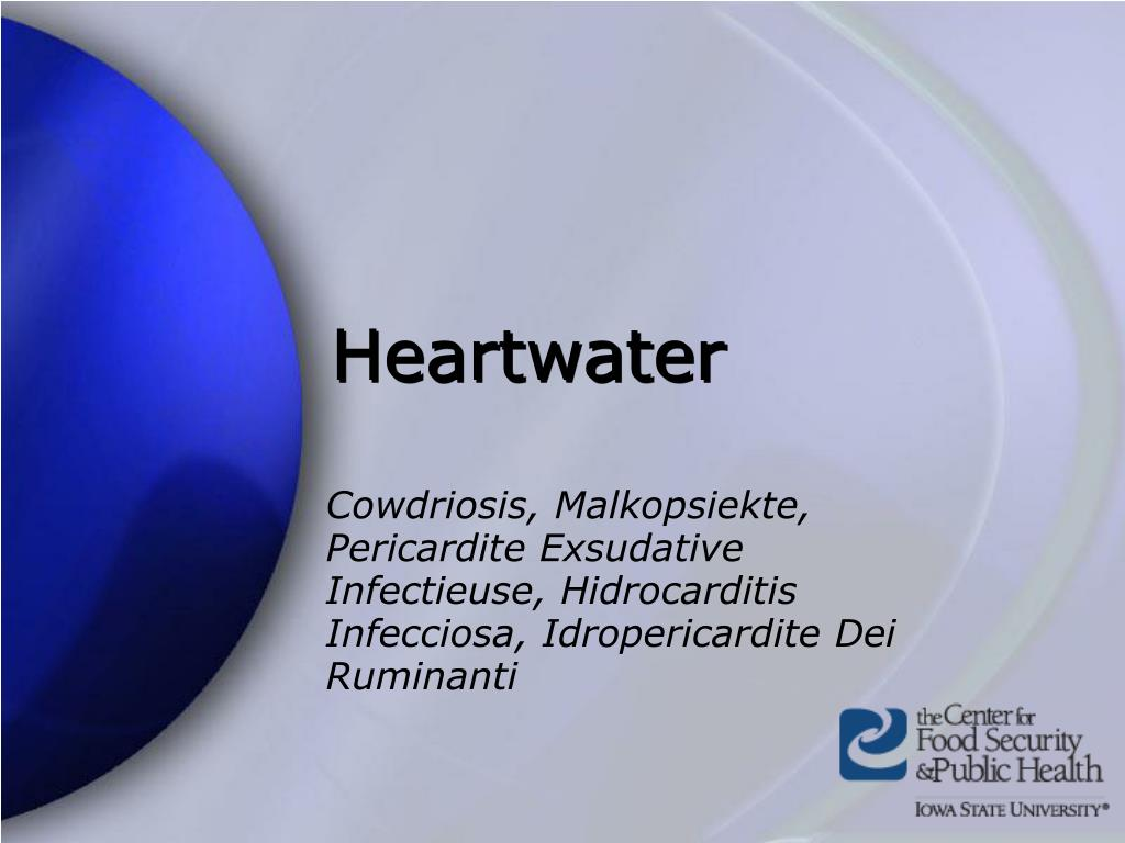 heartwater l.