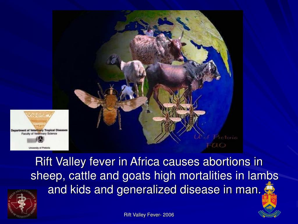 Rift Valley fever in Africa causes abortions in sheep, cattle and goats high mortalities in lambs and kids and generalized disease in man.
