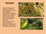 aureum