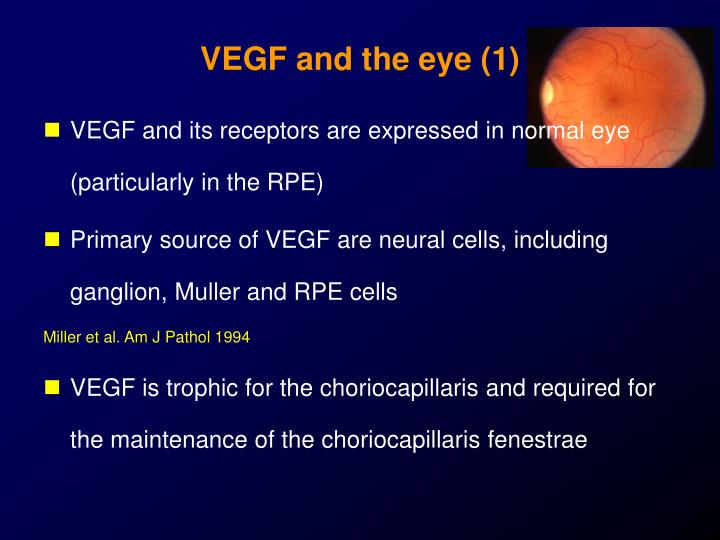 VEGF and the eye (1)