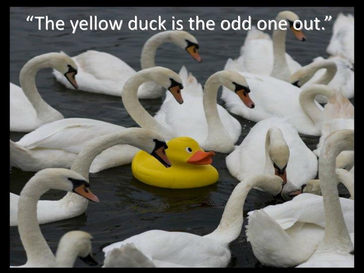 """The yellow duck is the odd one out."""
