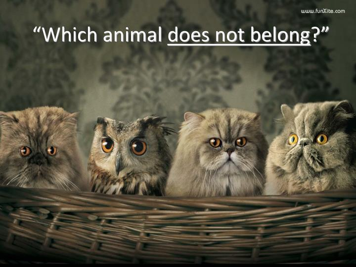 """Which animal"